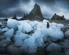 Antarctica Dream (Korzhonov Daniil) Tags: superior alt antarctica tall ship penguin penguins animals nikon gitzo lucroit iceberg