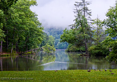 Fog Over Hungry Mother Lake @ Hungry Mother State Park - Marion, VA (Paul Diming) Tags: civilianconservationcorp smythcounty stateparks landscape marionvirginia dcr parks virginiastateparks park hungrymotherlake summer marion statepark smythcountyvirginia virginiadepartmentofconservationrecreation virginia dailyphoto hungrymotherstatepark hungrymothercreek fog d7000 pauldiming ccc hungrymother unitedstates us