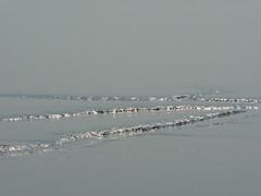 Interim (achatphoenix) Tags: mudflat mud water wasser waddensea wattenmeer waterscape watt patterns tidal lowtide lowersaxony eastfrisia rheiderland ostfriesland aqua