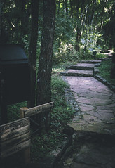 Where would you like to go? (Pablin79) Tags: path sign forest wood colors light nature outdoors cuñapirulodge aristobulodelvalle misiones argentina trees travel trip shadows dark eco stairs bokeh dof