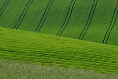 green (luporosso) Tags: natura nature naturaleza naturalmente nikon nikonitalia verde green geometrie geometry ruralgeometry rurale rural scorcio scorci country countryside marche italia italy rossolupo luporosso