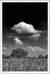 IMGP5127-sw-Rahmen-kl (fredericfromage) Tags: sw bw monochrom landschaft himmel felder wolken münsterland pentaxart