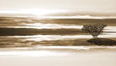 Blue Lake-1-1 (Poli Maurizio) Tags: sony sonydsch200 disegno art abstract painting sculpture museum gallery virtual artist master famous canvas painter collection drawing impressionism naturalism renaissance expressionism realism baroque sketch garden portrait autumn flower light nature sky spring summer indoor travel water woman yellow blue black white color movement figure macro photo object fine unlimited still life mattepainting fantasy fantastic facebook twitter linkedin pinterest instagram tumblr outdoor atmosferic watercolor technique surrealism digitalart 3dweddingpartyfamilytravelfriendsjapanvacationlondonbeachcaliforniabirthdaytripnycsummernatureitalyfrancemeparisartflowerssanfranciscoeuropechinaflowernewyorkwaterpeoplemusiccameraphone 3daustraliachristmasusaskygermanynewcanadanightcatholidayparkbwdogfoodsnowbabysunsetcitychicagospaintaiwanjulybluetokyoenglandmexicowinterportraitgreenred 3dpolimaurizioartworkredfunindiaarchitecturegardenmacrospringthailandukseattlefestivalconcertcanonhouseberlinhawaiistreetlakezoofloridajunemaywhitevancouverkidstreecloudstorontobarcelonageotaggedhome 3dbwbwdigitalseadaytexasscotlandcarlighthalloweencampingchurchanimalstreeswashingtonrivernikonaprilbostongirlirelandgraffitiamsterdamrocklandscapeblackandwhitecatsnewyorkcitysanromeroadtripurbanhoneymoonocean 3dwatercolorsnewzealandmarchblackmuseumyorkhikingislandmountainsyellowsydneysunhongkongshowgraduationcolorfilmmountainanimallosangelesschoolmoblogphotodogs 3dartdesigndisegnosiciliacalabriabasilicatacampaniamarcheabruzzomoliselaziotoscanaemiliaromagnalombardiavenetofriuliveneziagiuliapiemontevalledaostaliguriatrentinoaltoadigepuglia 3dlandscapepaesaggiolunasolemarenuvolecittàtramontoalbamontagnecollinenebbialuceautomobilearredamentointerniesterninaturamortacieloragazzadonnauomobambinofruttabarca 3dcanigattirinascimentomodelbarocconaturalismomattepaintingfuturismoastrattismocubismosurrealismorealismoiperealismoclassicismorococomanierismoromanticismoimpressionismogiocovirtu