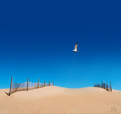 flying high as a kite (marianna_armata) Tags: gull kite flying high beach fence blue sky hff mariannaarmata florida