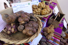 Native potato varieties on display at the World Potato Congress 2018. Photo: H.Holmes/RTB