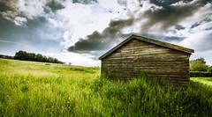 Long Grass - Explore (Matthew Johnson1) Tags: explored explore barn canon clouds drama green hedges landscape longgrass nobody northamptonshire outdoors starburst sun trees welford wideangle woodbarn blue grass