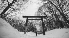 Sapporo Shrine // Voigtlander Super Wide-Heliar 15mm f/4.5, Sony A7RM2 (klyuen) Tags: blackandwhite blackwhite bnw bw monochrome 北海道 hokkaido japan 日本 travel travelphotography snowing snow snowstorm snowfield white wood trees forest outdoor park shrine temple voigtlander voigtlander15mm 15mm heliar wideangle ultrawide superwide asph vm sonyalpha sonya7 sony a7 alpha voigtlanderlens manuallens primelens prime cosina a7rm2 a7rmii a7r2 klyuen klyuencom blizzard frost cold frozen baretrees gate japanese culture asian worship religious religion sapporo 札幌 tree wooden torii tradition traditional cultural entrance path passage route sacred road monastery