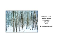 """Snowy Grove • <a style=""""font-size:0.8em;"""" href=""""https://www.flickr.com/photos/124378531@N04/42646141831/"""" target=""""_blank"""">View on Flickr</a>"""