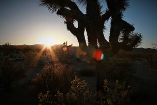 Desert Foliage and Falling Sun