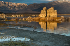 After Sunrise at Mono Lake (madrones) Tags: glass monolake landscape leevining northamerica sierranevada water lake weather clouds northerncalifornia california unitedstatesofamerica colorful easternsierra color sunrise nature mirror ca colour dawn monocounty usroute395 us395 usa leevinning us