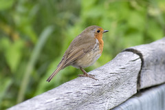 "robin2 • <a style=""font-size:0.8em;"" href=""http://www.flickr.com/photos/157241634@N04/42709631961/"" target=""_blank"">View on Flickr</a>"