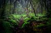 Echanted forest.. (JACRIS08) Tags: bosque forest verde helechos vegetacion