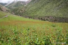 DSC_5753 (Sastry L.N. Jyosyula) Tags: adikailash panchakailash kailash shiva gunji omparvat