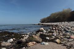 Gravel beach (michael_hamburg69) Tags: brodten germany deutschland stone stein schleswigholstein ostsee balticsea naturstrand gravelbeach kiesstrand brodtenersteilufer nature coast sea meer steilküste