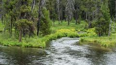 Green! (Lone Rock) Tags: northumpquariver oregon water gordoncottrell umpquanaationalforest