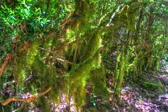 musgo (Carlos M. M.) Tags: hdr huesca aragón pirineos sony sonyalpha6000 ribagorza peñaguara