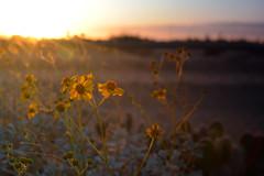 Patience (morganyanez) Tags: flower number 1 spring arizona 35mm 7100 d7100 summer cactus 2018 desert casa grande vacation plant nature