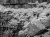 St Govans Head  31.05.2018_007 (Nigel Cliff) Tags: pembrokeshire samyang12mmf2 stgovanshead