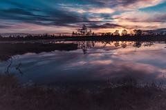 Sunrise shades (Storm'sEndPhoto) Tags: kauhaneva kauhanevanpohjankankaankasallispuisto kansallispuisto luonto maisema nationalpark finland suomi eteläpohjanmaa lansisuomi sunrise bluehour morgenlicht aamuvalo aamu järvi kauhalammi lake pond swamp myre mire bog suo neva reflections explore adventure