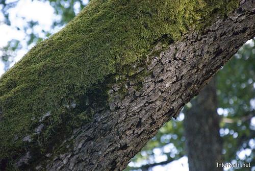 Шацький Національний Природний Парк Озеро Пісочне Стовбури дерев InterNetri  Ukraine 384