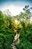 Where Maryland Starts Looking Jungle-ish (mbinebrink) Tags: maryland forest stream sunset spring trees greenery nikon d750 tamron sunstar