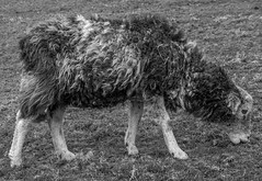 Dolly (StevePilbrow) Tags: loughrigg tarn national trust lake district park cumbria lakes north west england country side water walking trees hill pike nikon d7200 nikkor 18105mm march april 2018