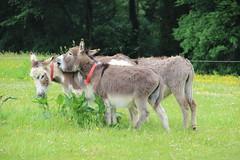 IMG_20180529_124502 (Luna-Woona Moon) Tags: donkeys rescue animals equine devon england