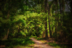 Welcome? (Modkuse) Tags: photoart nature natural landscape nikon nikond700 nikondslr trees path woods art