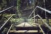 big spider (Knee Bee) Tags: hiking eifel monschau bridge brücke spider spinne nature natur