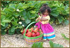 Leletis süße Ernte  ... (Kindergartenkinder 2018) Tags: erdbeeren kindergartenkinder leleti