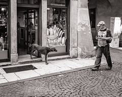 When dogs go shopping... (raymorgan4) Tags: verona comune di italia shopping dog funny humorous lighthearted x100f fujifilmx100f acros doggy