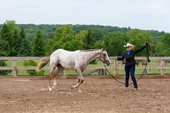 JBC_4978.jpg (Jim Babbage) Tags: krahc horseshow appaloosa horses 2018