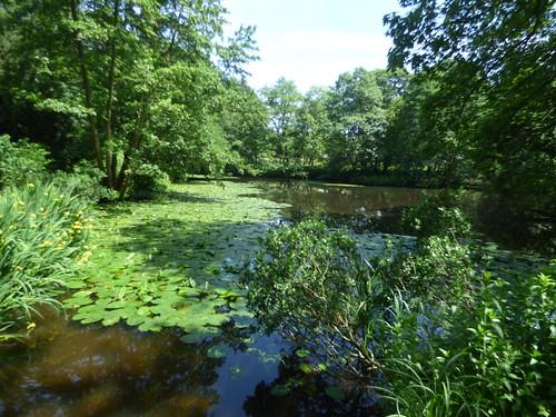 The Great Pool at Baddesley Clinton