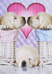 """Puppy Love"" (Puzzler4879) Tags: dogs puppies animalart dogart art puppylove puzzles jigsawpuzzles jigsaws a590is canona590is powershot canonpowershota590is powershota590is"