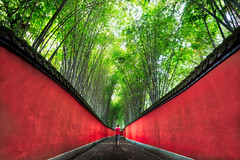Chengdu Pathway (Stuck in Customs) Tags: chengdu china treyratcliff stuckincustoms stuckincustomscom 80stays rcmemories hdr aurorahdr hdrphotography hdrphoto trees bamboo green red person human woman path