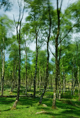 Windy (JonoHub) Tags: spring windy trees blowing peakdistrict movement longexposure