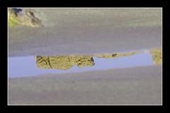 Portman abstracciones en playa (jrusca) Tags: portman playalastre mediterráneo mar detalles abstracciones costa
