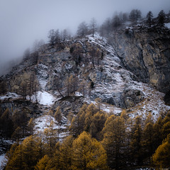 Grey day (Rico the noob) Tags: dof rock d850 landscape comerge nature switzerland 70200mmf4 stones clouds trees 2017 zermatt tree schweiz forest 70200mm fog rocks published snow outdoor