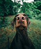 The measurement of beauty (@phanttoni) Tags: dobermann doberman dog smile beautiful woman demi animal photoshop phanttoni vingette green summer rain dark sony sonya7 a7 ilce7 zeiss 1635 f4 finland jämsä jämsänkoski dogphotography wide angle