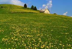 The old Alm (maurizio.pretto) Tags: montagna prati fiori malga campi asiago italy primavera landscape