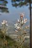Find the intruder (Guillermo S.L.) Tags: alicante alacant comunidadvalenciana españa sonya6000 sel35f18 valencia insecto insect bug naturaleza nature spring primavera