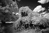 Flue (F. Neil S.) Tags: vines dramaticclouds fluecollar trees grasses swallowedup undercover chimney missing loss absence latespringsun rural chathamcounty homestead remains brick remnant fullspectrumconversion blackandwhite monochrome hoya r72 filter sony nex6 emount mirrorless