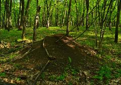 Huge anthill (МирославСтаменов) Tags: anthill russia zhiguli mogutova forest