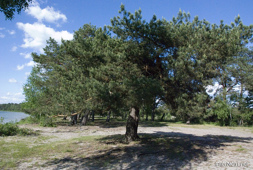 Шацький Національний Природний Парк Озеро Пісочне Сосни InterNetri  Ukraine 352