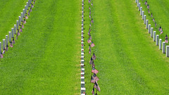 remembrance .jpg (remiklitsch) Tags: memorialday 2018 lanationalcemetary tombs tombstones flags servicemen servicewomen cemetary military nikon remiklitsch pattern green white la losangeles red blue lines