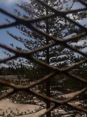 #nature #tree #photography #monastir #tunisia (asma.brahim@rocketmail.com) Tags: photography nature tree monastir tunisia