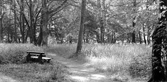 fomapan100_6x12_0001 (ekech) Tags: analog analogue ishootfilm istillshootfilm buyfilmnotmegapixels diy diy6x12rollfilmback 6x12 3dprint 3ddruck rollfilmback rollfilm forest wald bäume trees fomapan200 fomapan foma rodinal blackwhite schwarzweiss bw sw monochrome horseman45hd horseman 4x5 4x5camera grosformat largeformat panoramic panorama 21