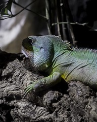 Animal Rest (Noelgar99) Tags: plants plant rest desatured blacks naturaleza natural nature green jungle chameleon dragon aquarium animals animal