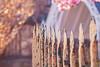 Dreamy (A Great Capture) Tags: agreatcapture agc wwwagreatcapturecom adjm ash2276 ashleylduffus ald mobilejay jamesmitchell toronto on ontario canada canadian photographer northamerica torontoexplore spring springtime printemps 2018 fence bokeh castiron rusty rustic cracked light