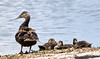 06-03-18-0020969 (Lake Worth) Tags: animal animals bird birds birdwatcher everglades southflorida feathers florida nature outdoor outdoors waterbirds wetlands wildlife wings